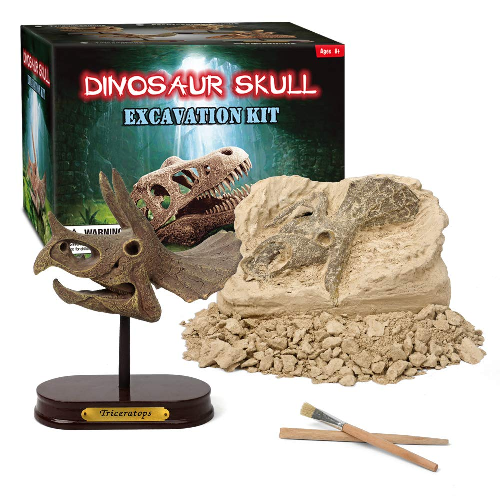 Dinosaur Skull Excavation Kit – SkullVillage com